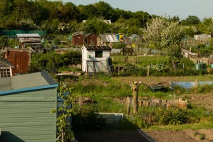 Allotments May 12 2016 - 1
