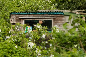 Allotments May 12 2016 - 10