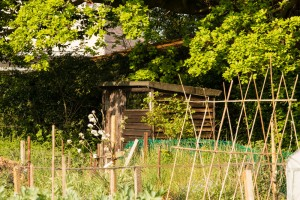 Allotments May 12 2016 - 16