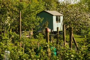 Allotments May 12 2016 - 18