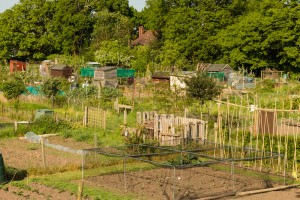 Allotments May 12 2016 - 2