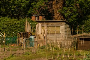 Allotments May 12 2016 - 21