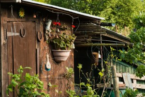 Allotments May 12 2016 - 24