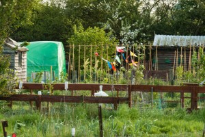 Allotments May 12 2016 - 25