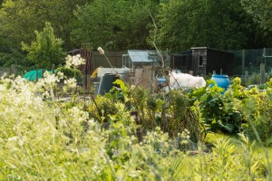 Allotments May 12 2016 - 26