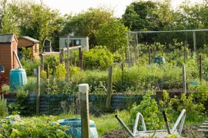 Allotments May 12 2016 - 27