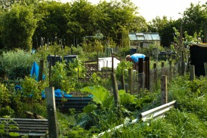 Allotments May 12 2016 - 28 (1)