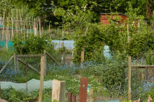 Allotments May 12 2016 - 9